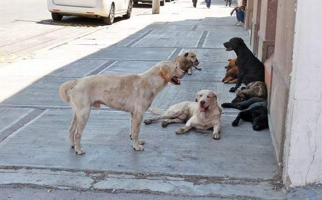c6427c371e Vecinos solidarios construyeron una cucha para perros callejeros en Paraná