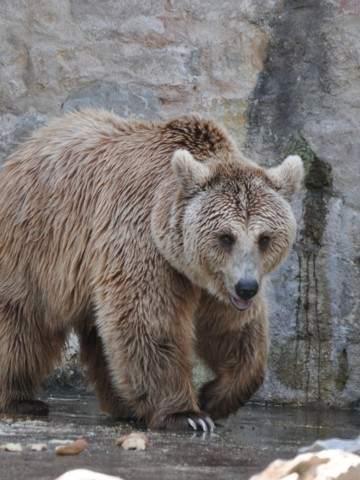 Más De 22 Mil Personas Compraron Un Zoológico Para Liberar A